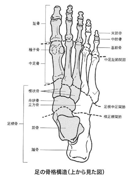 学生です私は、陸上をしています。足の痛みについて教えてく ...